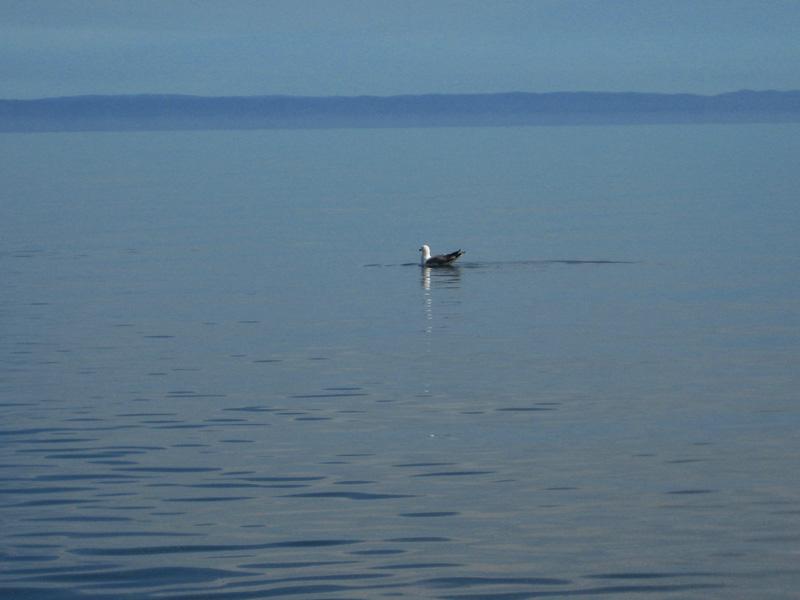 Вы сможете посмотреть на прозрачную холодную воду Байкала.